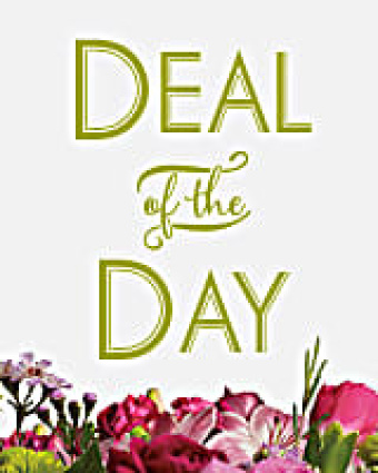 Daily Deal of the Day Shop Special